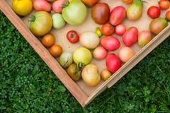 Viele bunten Tomaten mit unterschiedlichem Größenhintergrund lizenzfreies stockfoto