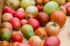 Viele bunten Tomaten mit unterschiedlichem Größenhintergrund stockbild