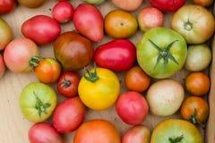 Viele bunten Tomaten mit unterschiedlichem Größenhintergrund stockbilder