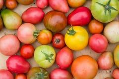 Viele bunten Tomaten mit unterschiedlichem Größenhintergrund lizenzfreie stockbilder