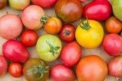 Viele bunten Tomaten mit unterschiedlichem Größenhintergrund lizenzfreie stockfotografie