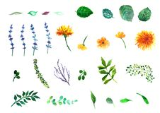 Viele dekorativen Elemente Sammlung mit Blättern Frühling oder Sommerdesign für Einladung Lizenzfreies Stockfoto
