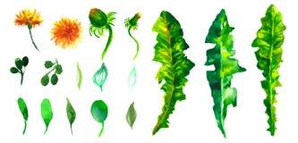 Viele dekorativen Elemente Sammlung mit Blättern Frühling oder Sommerdesign für i Stockfotografie