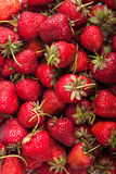 Viele Erdbeeren Lizenzfreies Stockbild
