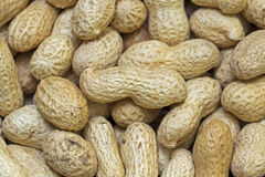 Viele Erdnüsse in den Shells Stockfotografie