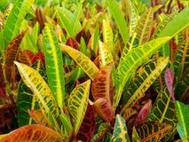 viele Farbe von Blättern lizenzfreie stockfotos