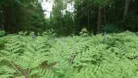 Viele Farne im Wald Lizenzfreie Stockfotos