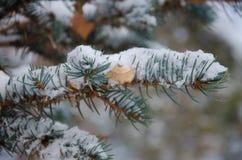 Viele Fichtenzweige im Schnee Stockfotos