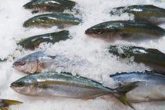 Viele Fische lizenzfreies stockfoto