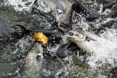 Viele Fische lizenzfreie stockfotografie