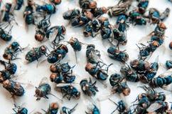Viele fliegen und schmutziges Insekt und tote Fliege oder Aas der Fliege auf Whit Lizenzfreie Stockfotografie