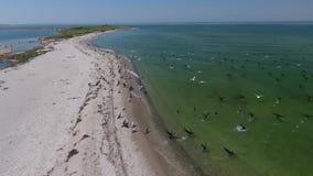 Viele Fliegenvögel über dem Wasser nahe der Insel stock footage