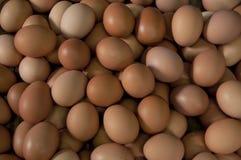 Viele frischen Eier Stockfotos