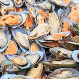 Viele frischen großen Miesmuscheln liegen in Erwartung des Kochens auf dem Grill Lizenzfreie Stockbilder