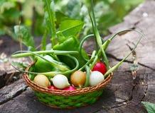Viele Frischgemüse in einem Weidenkorb Mehrfarbige Rettiche Grüner Grüner Pfeffer Der Stiel des Knoblauchs Lizenzfreies Stockfoto