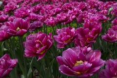 Viele geöffneten Blumen Stockfotografie