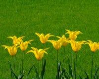 Viele Gelbblumen Stockbild