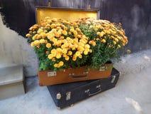 Viele gelbe Blumen in einem Weinlesekoffer Stockbild