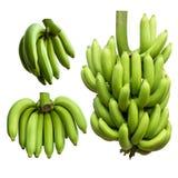 Viele grünen Bananen Stockfotografie