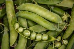 Viele grünen Erbsen in den Hülsen und eine abgezogen Lizenzfreie Stockfotografie