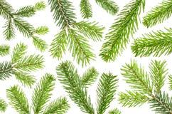 Viele grünen Tannenzweige vor weißem Hintergrund lizenzfreies stockfoto