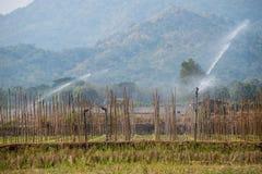 Viele Grünkohle auf den Landwirtschaftsgebieten bei Phutabberk Phet Lizenzfreies Stockbild