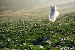 Viele Grünkohle auf den Landwirtschaftsgebieten bei Phutabberk Phet Lizenzfreie Stockfotografie
