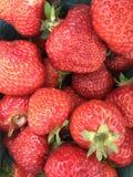 Viele hellen, sind frische Beeren einer Erdbeere Lizenzfreie Stockfotografie