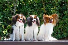 Viele Hunde sitzen auf dem Hintergrund von grünen Büschen Stockbilder