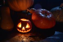 Viele Kürbise im dunklen Wald-Halloween-Kürbissteckfassungsgesicht lizenzfreie stockfotografie