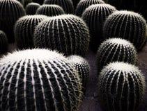 Viele Kaktusbälle bedeckt durch Nadel lizenzfreies stockfoto