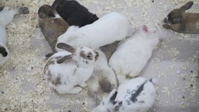 Viele Kaninchen stehen in einem Käfig still stock video footage