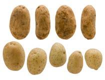 Viele Kartoffeln Stockfoto