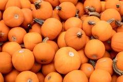 Viele kleine orange Kürbise, Kürbishintergrund für Halloween Stockfotografie