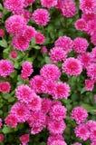 Viele kleinen Blumen Lizenzfreies Stockbild