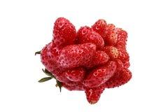 Viele kleinen Erdbeeren zusammen angebaut in eine groß Stockfotografie
