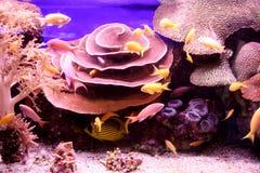 Viele kleinen Fische, die unter Wasser schwimmen lizenzfreies stockfoto