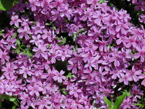 Viele kleinen Florets Stockfoto