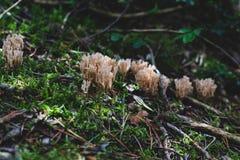 Viele kleinen Pilze nahe Baumstamm lizenzfreies stockbild