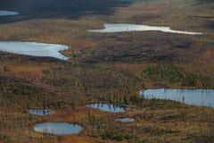 Viele kleinen Seen und taiga tot stockbilder