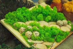 Viele kleinen Succulents Stockfotos