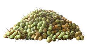 Viele Kokosnüsse auf weißem Hintergrund Stockfotografie