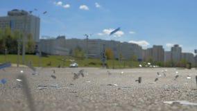 Viele Konfettis auf der Straße - slowmo 180 fps stock footage