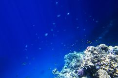 Viele korallenroten Fische Stockbild