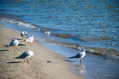 Viele Möven stehen auf der Küste stockbilder