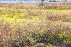 Viele Mücken auf einem Gras Lizenzfreie Stockfotos
