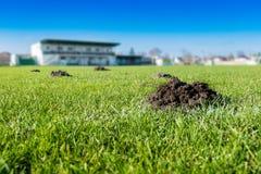 Viele Maulwurfshügel/Molehügel auf Fußballfußballplatz Stockbild
