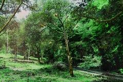 Viele Monthong-Durians auf Baum im landwirtschaftlichen Garten lizenzfreie stockfotografie