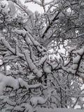 Viele Niederlassungen in den starken Schneefällen lizenzfreies stockfoto