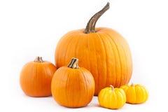 Viele orange Halloween-Kürbise Lizenzfreie Stockfotos